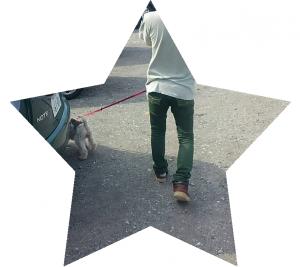 20166星